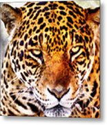 The Stare Metal Print by Lester Phipps