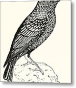 The Starling Metal Print