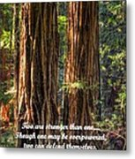 The Strength Of Two - From Ecclesiastes 4.9 And 4.12 - Muir Woods National Monument Metal Print