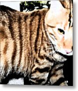 The Striped One Metal Print