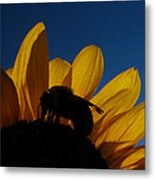 The Sunflower And The Bee Metal Print