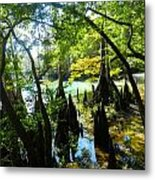 The Swamp By The Springs Metal Print by Julie Dant