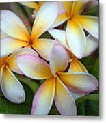 The Sweet Fragrance Of Plumeria Metal Print