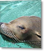 The Swimmer Metal Print