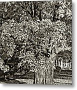 The Swinging Tree Sepia Metal Print