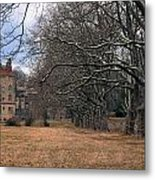 The Sycamores Metal Print