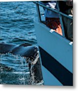 The Tail Of A Whale Right In Front Metal Print