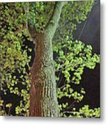 The Tall Trees Watch Metal Print