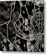 The Tangled Web Metal Print