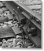 The Tenacity Of Nature Greyscale Metal Print