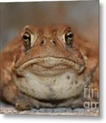 The Tennessee Toad Metal Print
