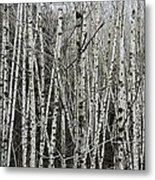 The Thicket Metal Print