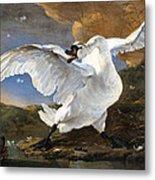 The Threatened Swan Metal Print