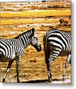 The Tired Zebras Metal Print