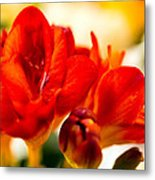 The Touch Of Red Metal Print