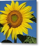 The Touch Of Sun Metal Print