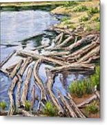 The Trail Series - Beaver Pond Metal Print