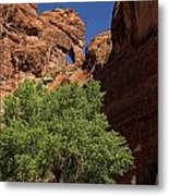 The Tree And The Window Metal Print