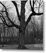 The Tree In The Park Metal Print