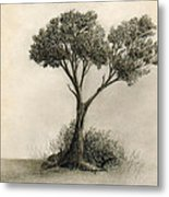 The Tree Quietly Stood Alone Metal Print