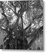 The Tree Vines Metal Print
