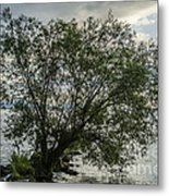The Tree With His Feet In Water Metal Print
