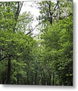 The Trees Of Illinois Metal Print