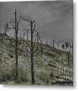 The Trees That Were Metal Print