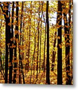 The Trees Through The Forest Metal Print