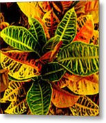 The Tropical Croton Metal Print by Lisa Cortez