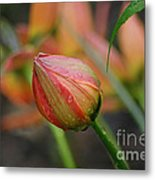 The Tulip Bud Metal Print