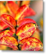 The Turning Season Metal Print