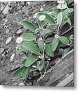 The Untouchable Plant Metal Print