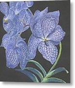 The Vanda Orchid Metal Print
