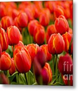 The Vibrant Ones Metal Print by Nick  Boren