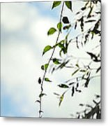 The Vine Metal Print by Stephanie Grooms