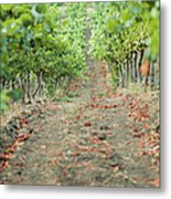 The Vines Metal Print by Ariane Moshayedi