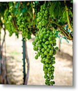 The Vineyard Metal Print