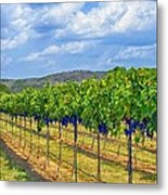 The Vineyard In Color Metal Print by Kristina Deane