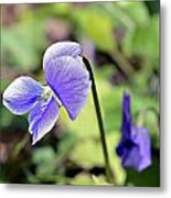 The Violet Metal Print by Susan Leggett