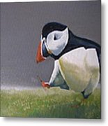 The Walking Puffin Metal Print by Eric Burgess-Ray
