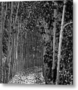 The Wall Of Trees II Metal Print