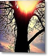 The Walnut Tree Metal Print