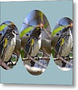 The Warbler Metal Print