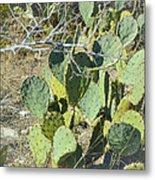 Cedar Park Texas Prickly Pear Cactus Metal Print