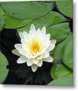 The Water Lilies Collection - 01 Metal Print