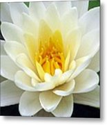The Water Lilies Collection - 03 Metal Print