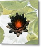 The Water Lilies Collection - Photopower 1034 Metal Print