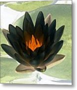 The Water Lilies Collection - Photopower 1037 Metal Print