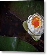 The Water Lily Metal Print